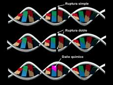 ADN REPARACION
